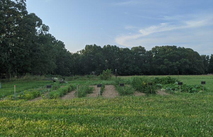 Our 2020 Garden